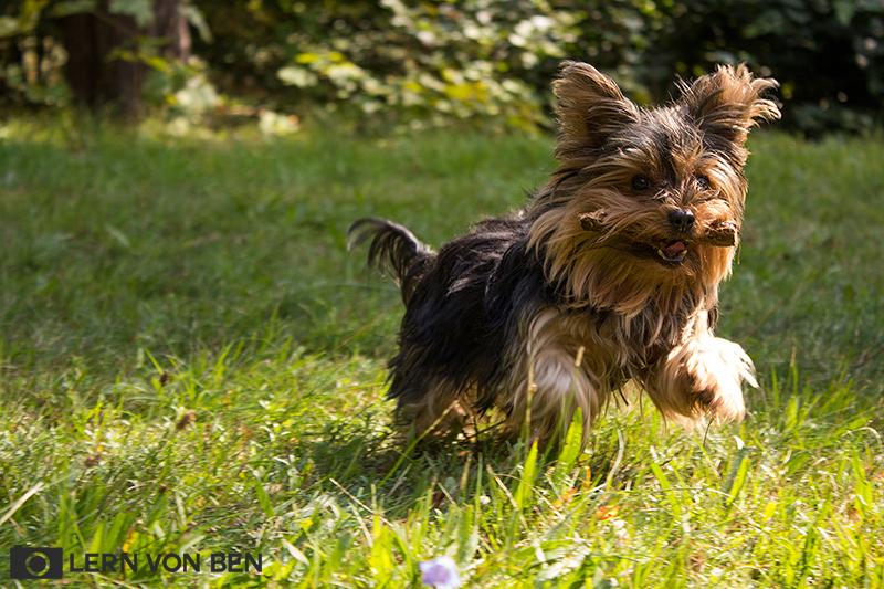 WEBRennt-Hund