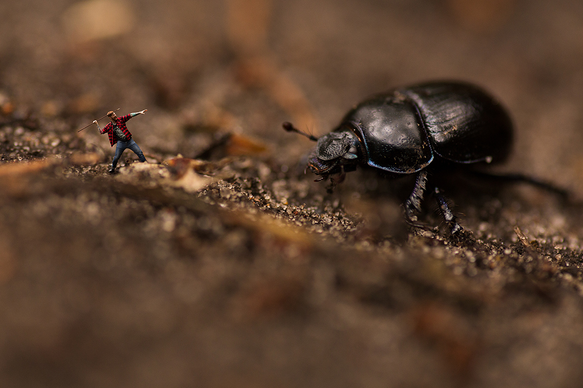 Wurf-Käfer