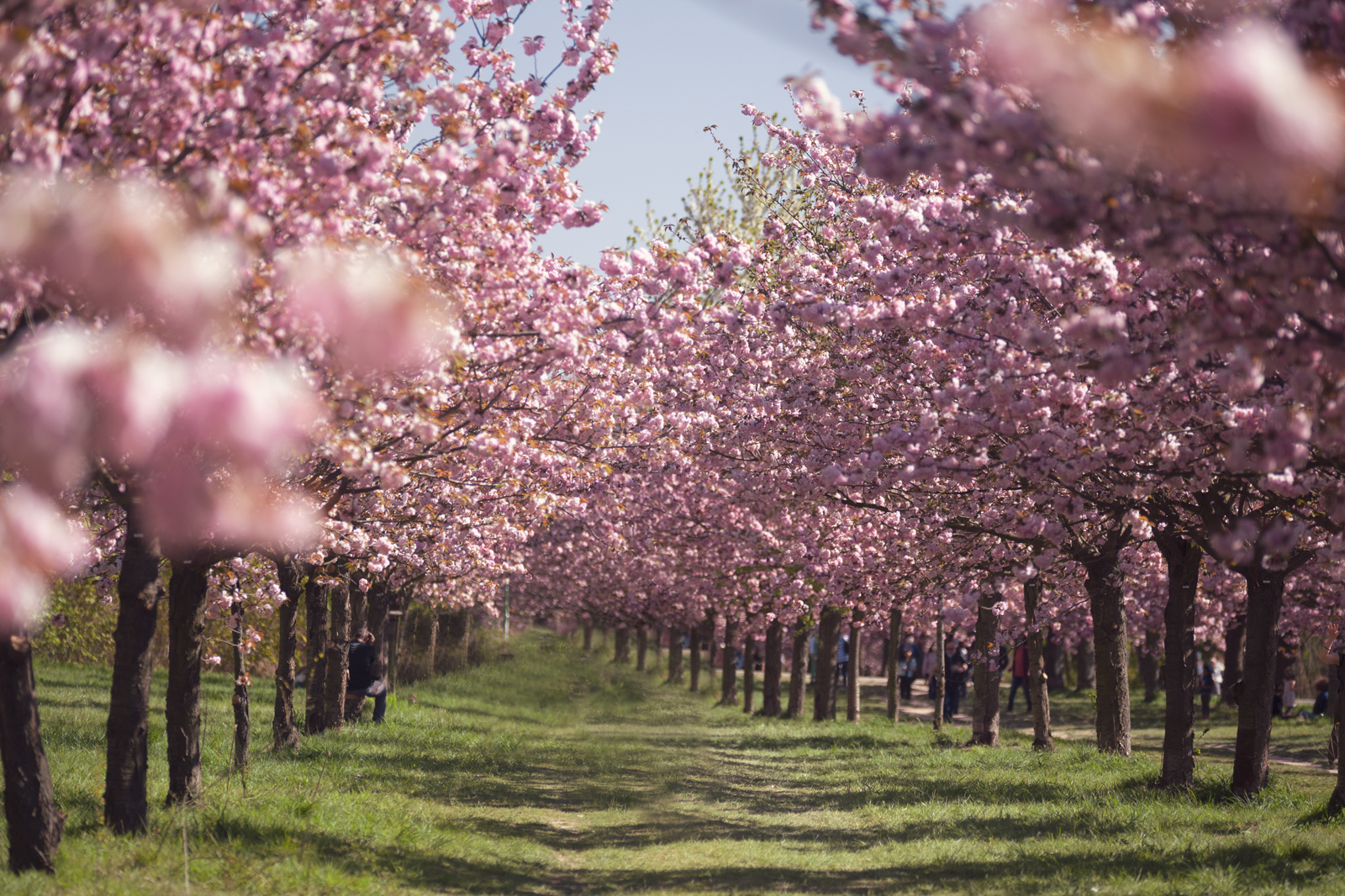 Jaworskyj Foto Reiseführer Top Fotospots im Frühling